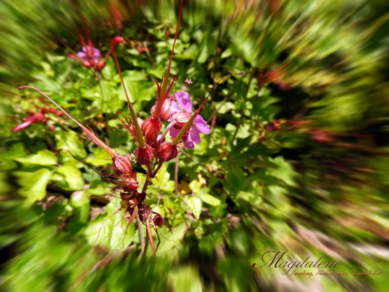 Rare Olympus flowers - Σπάνια λουδούδια του Ολύμπου