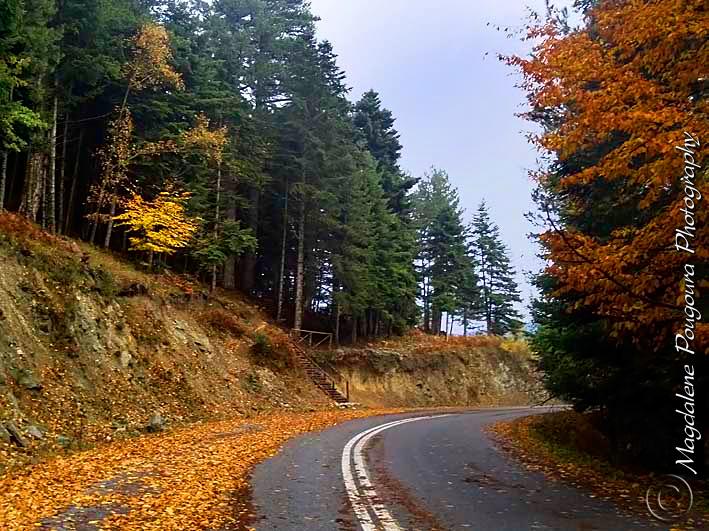 Autumn on Omympus Mt.  - Φθινόπωρο στον Όλυμπο